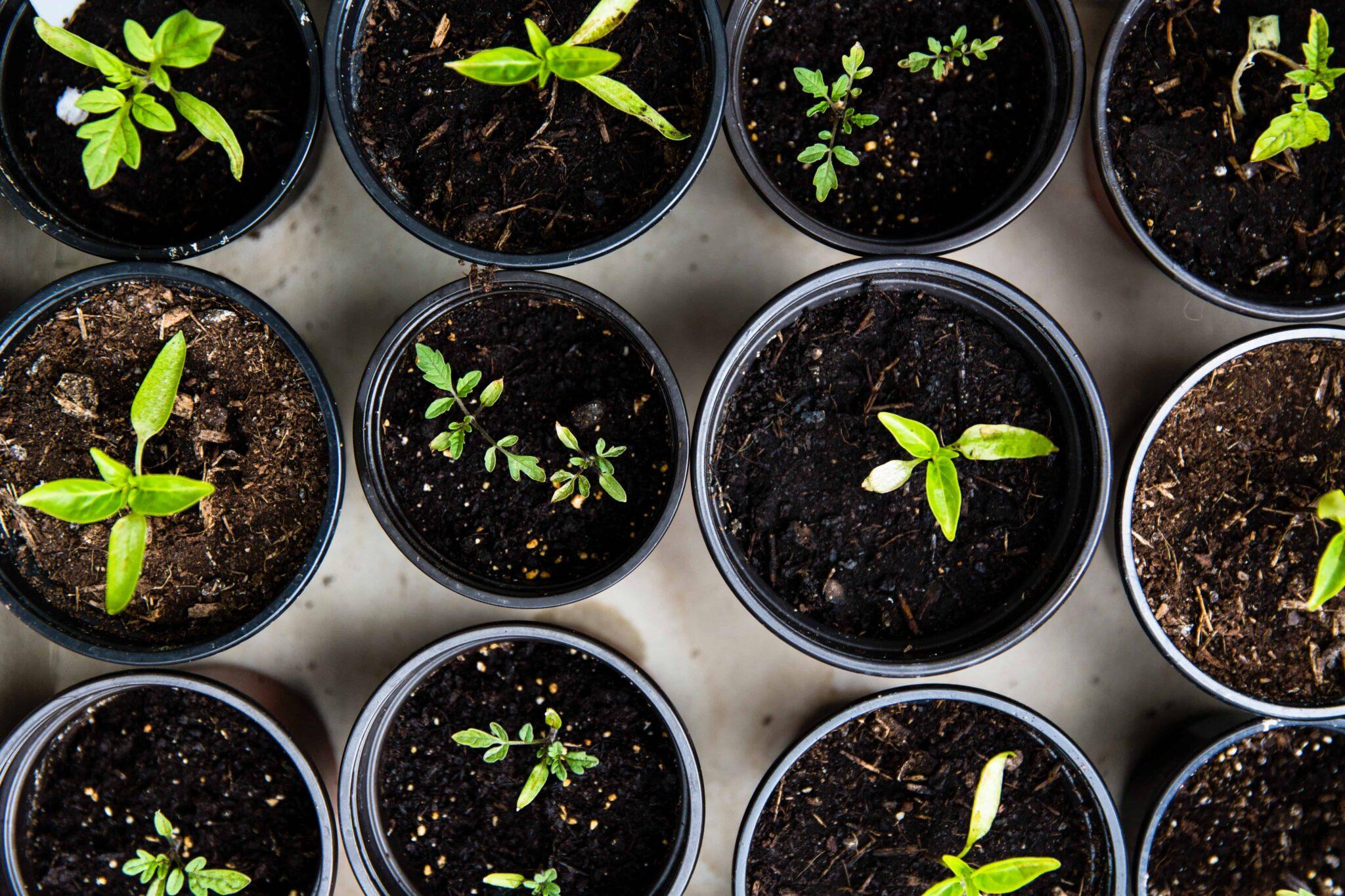 Neutralização De Carbono: Como Aliar Sustentabilidade Ao Seu Evento