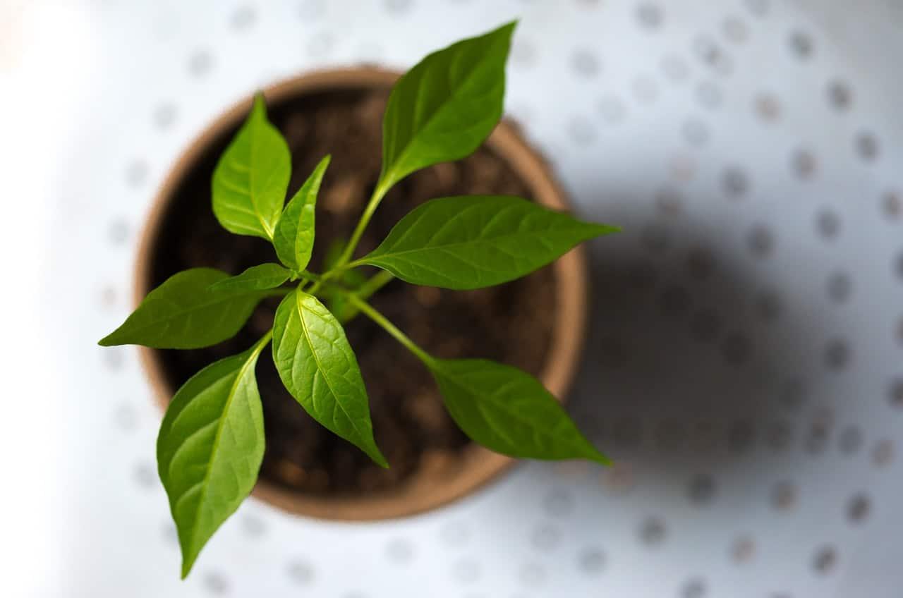 Sistema De Gestão Ambiental: Para Que Serve E Como Implementar?