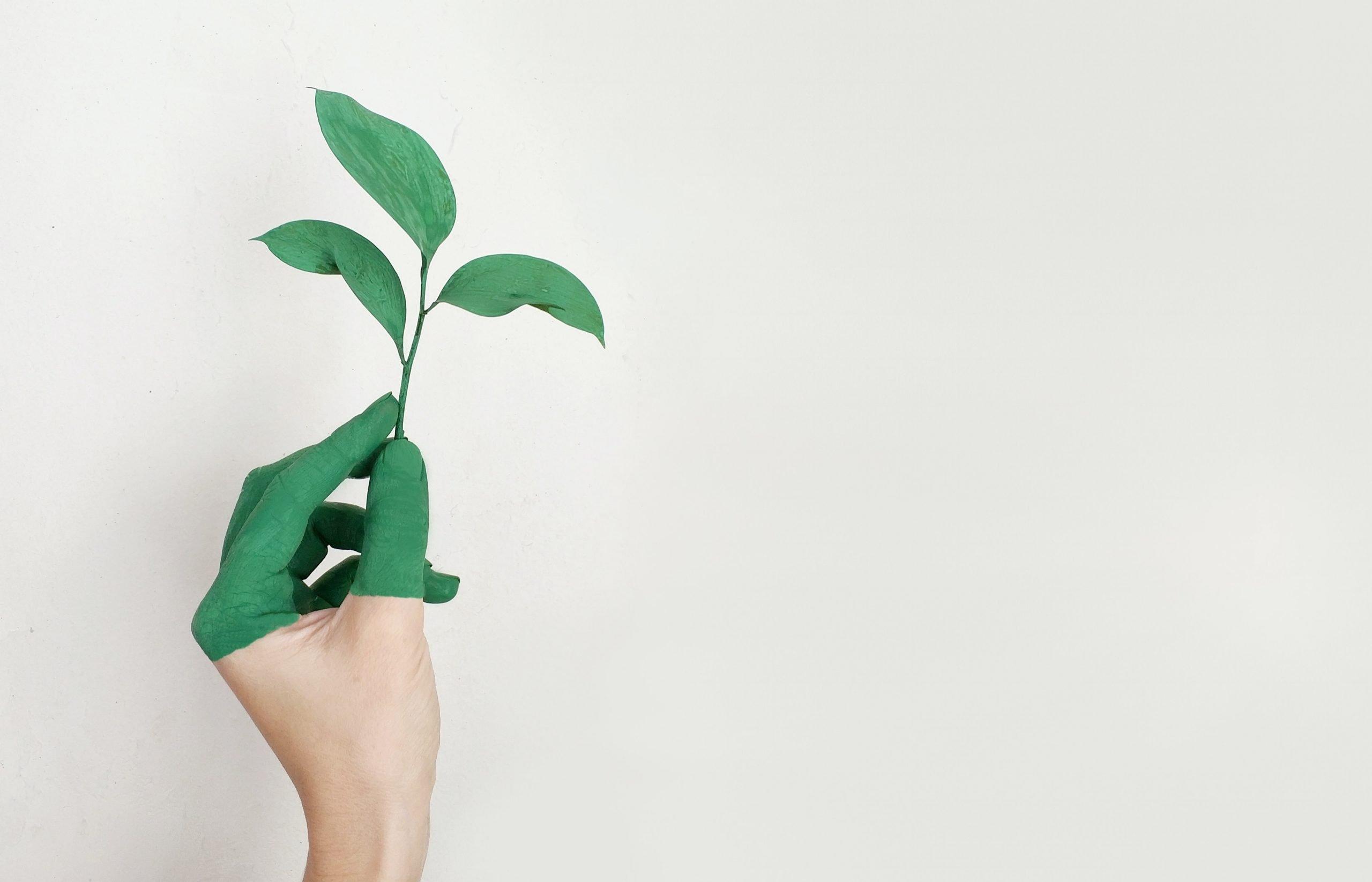 Pessoa Contribuindo Com O Marketing Verde