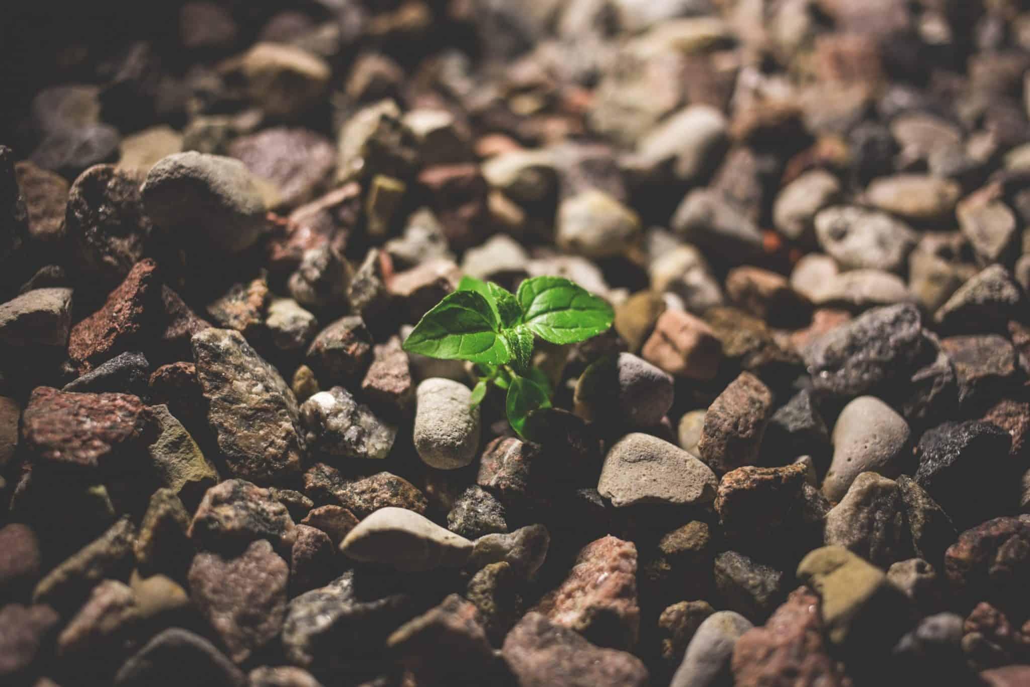 Créditos De Carbono E A Sua Funcionalidade